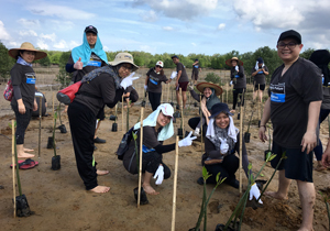 CMS joins Fuji Xerox for Mangrove Tree Planting